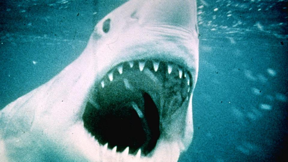 『JAWS/ジョーズ』